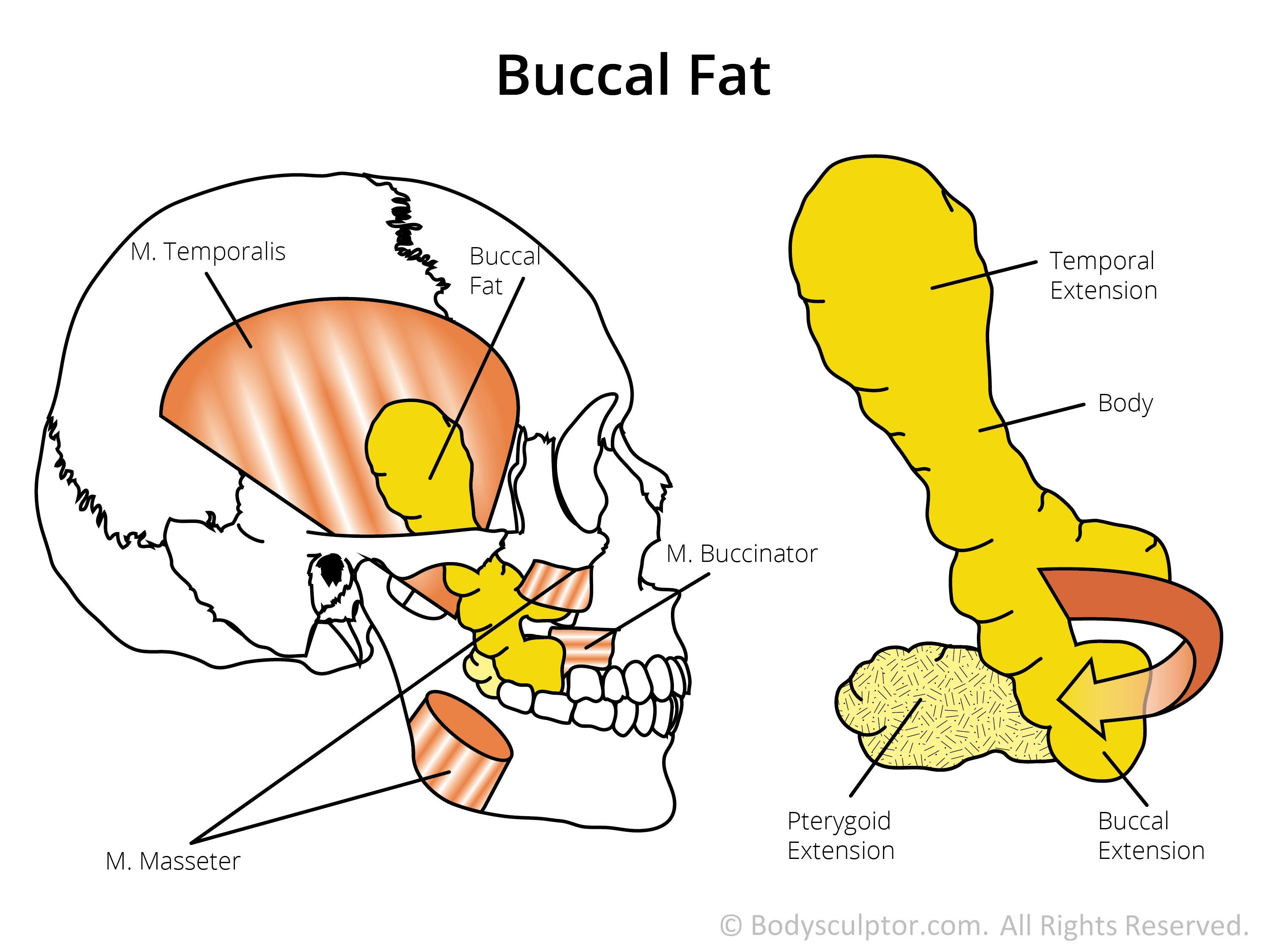 fat structure diagram engine wiring harness chicago il plastic surgeon dr otto placik breast