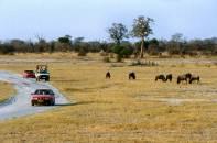 Heia Safari mit Streifengnus (Hwange National Park/Zimbabwe)