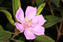 Einkeimblättrige / Monocots / Liliopsida