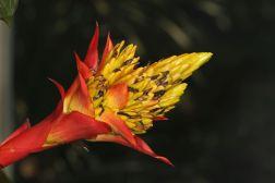 Bromeliengewächse / Bromeliads / Bromeliaceae
