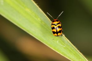 Käfer / Beetles / Coleoptera