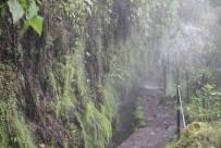 Wanderweg in Queimadas