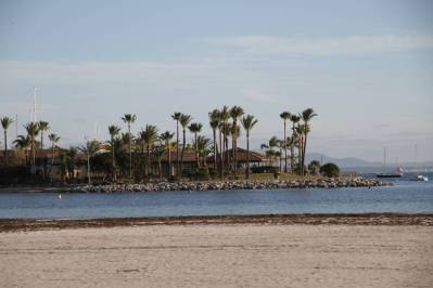 Strand mit Palmen in Puerto de Alcudia