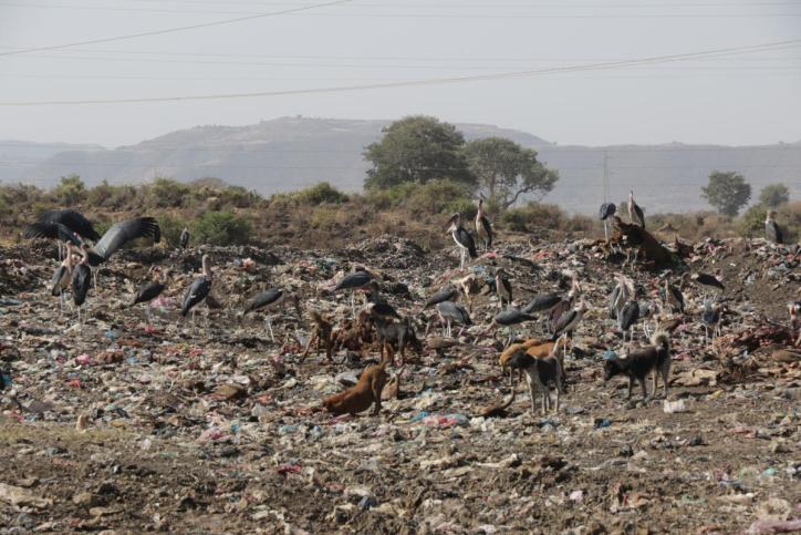 Müllkippe
