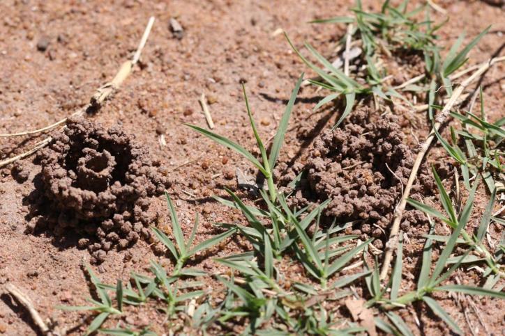 Solitäre Faltenwespen / Potter wasps / Eumeninae