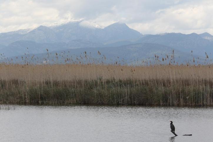 Naturschutzgebiet S'Albufera