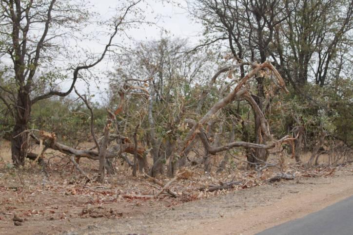 Zerstörung durch Elefanten