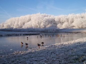 winter20073