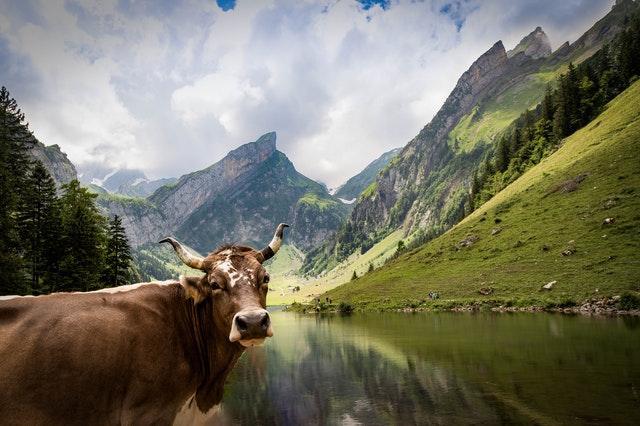 Digital-kurbarir-hat BD Online Cow-Market-Shopping