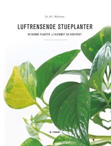 Luftrensende stueplanter