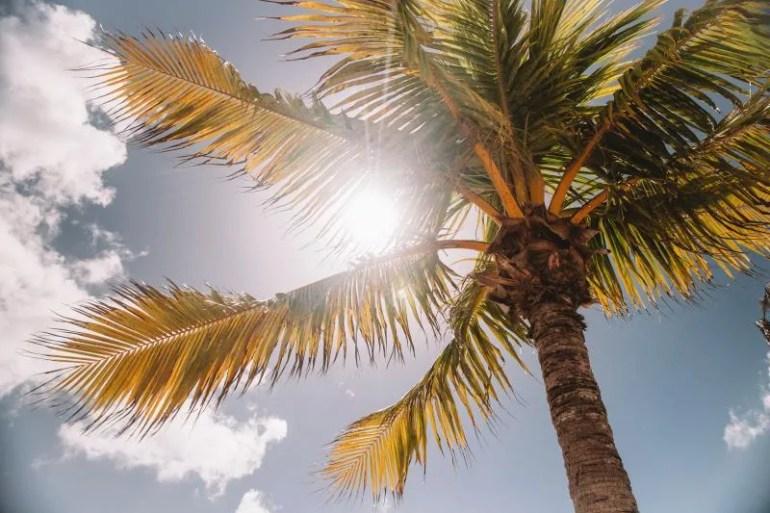 Cruisereis naar het Caribisch gebied