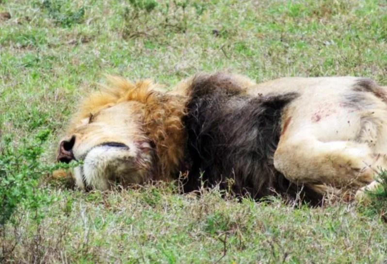 In Zuid Afrika op safari