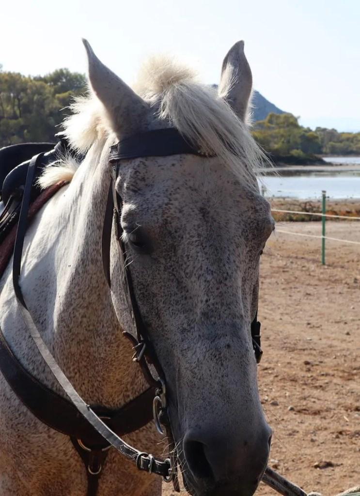 Paardrijden in het bos op het eiland Agistri in Griekenland (Mindfulness)