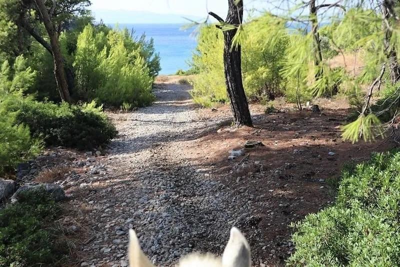Paardrijden op het strand in Griekenland