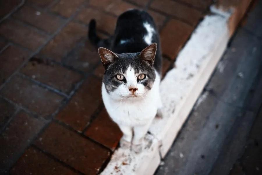 Katten in Istanbul