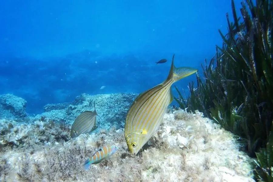 Snorkelen in Malta