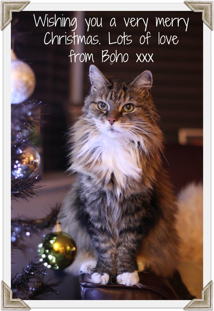 A Christmas Card Message From Boho Boho Weddings For The