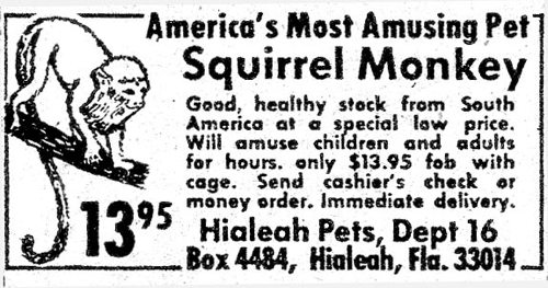 Man's account of ordering a live monkey from comic book ad