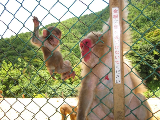 Arashiyama-Monkeys-21