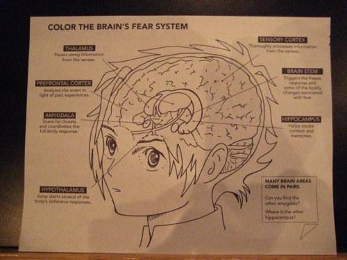 Brain-Fear