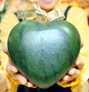Heartmelon