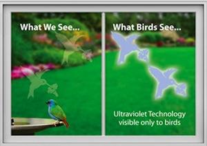 hummingbird-back.jpeg