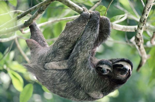 slothfactssocute.jpg