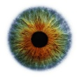 Artists Rankin Portfolio Specialprojects Images Eye-Scapes---01