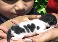 Assetpool Images 08324194532 Kitty-Love1-185