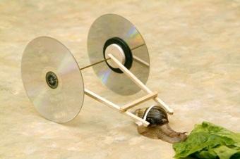 Benbasat User Snail-1