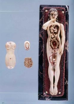 Exhibition Dreamanatomy Images 1200-Dpi Y2