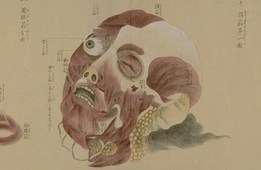 Images Anatomical Scroll
