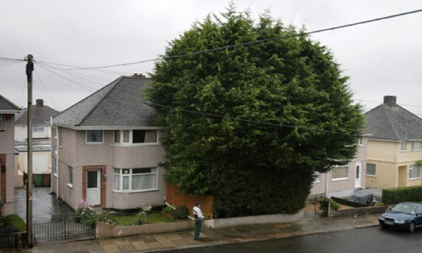 Sys-Images Guardian Pix Pictures 2010 9 6 1283802876077 Leylandii-006