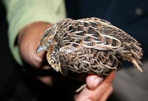 Wp-Content Uploads 090218-Extinct-Bird-Photo Big