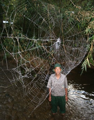 Wpf Media-Live Photos 000 261 Cache Huge-Spider-Webs-Kid 26176 600X450