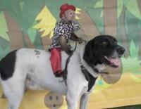 Monkey jockeys riding dogs / Boing Boing
