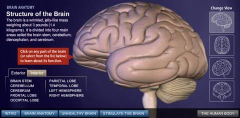 Brainstructure