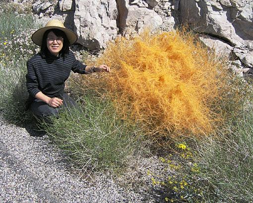 Orange vegetation - 1