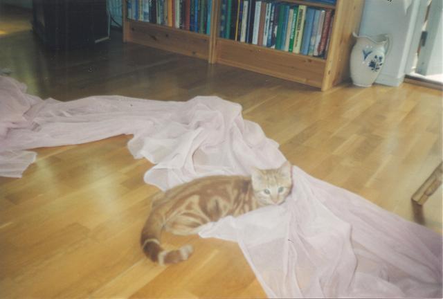 Katt <3 <3 <3 <3 <3