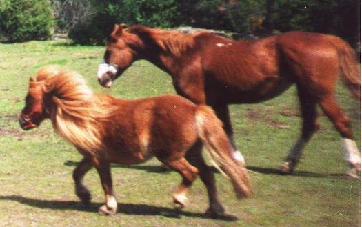 Ponnyer!