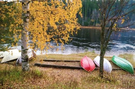 En oktoberdag tog jag sista chansen att fota en björk med höstlöv. Nu går hösten över i vinter.