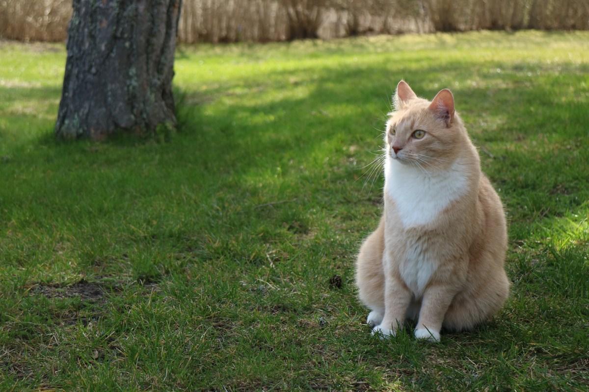 Katten Bosse