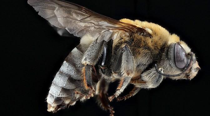 Bienes historie på topp i Tyskland