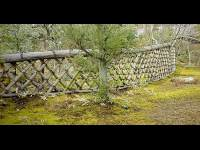 7 Plants That Are Good For Fencing - Boldsky.com