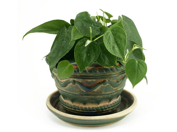 small side tables for living room at aaron s indoor plants to decorate house - boldsky.com