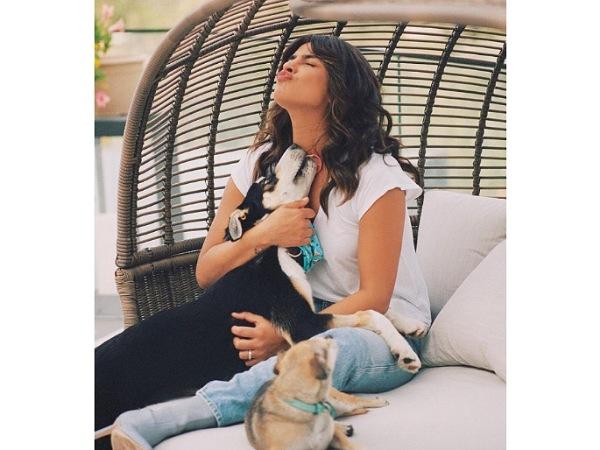 Priyanka Chopra Jonas Dogs