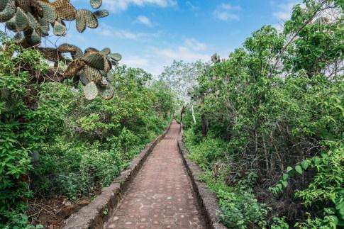 Galapagos - Tortuga Bay + Turtle Reserve (17 of 58) June 15