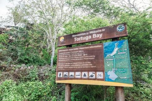 Galapagos - Tortuga Bay + Turtle Reserve (58 of 58) June 15