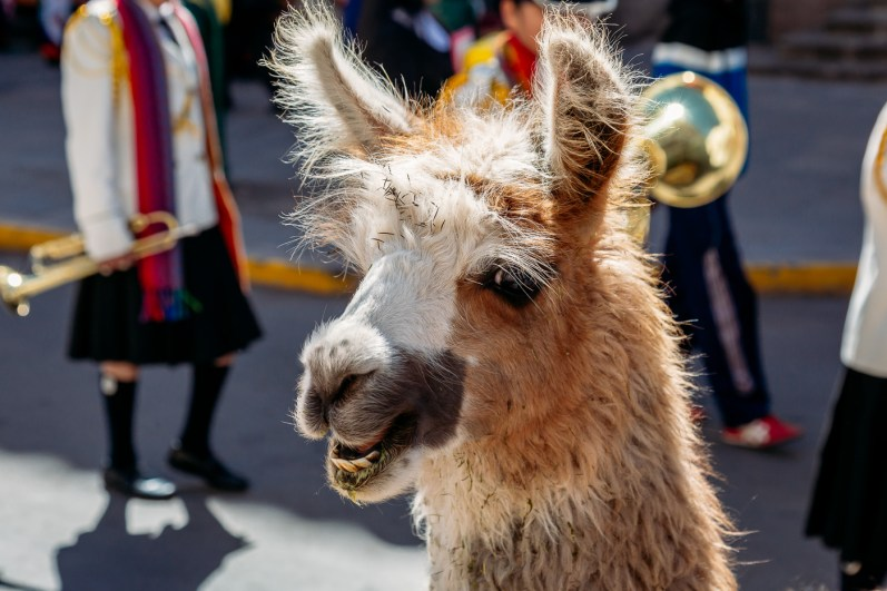 Cusco Inti Raymi Festival -56- June 2015