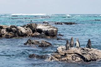 Galapagos - Los Tuneles (27 of 71) June 15